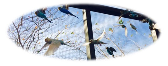 Port St. Lucie Dentist | View of Aviary